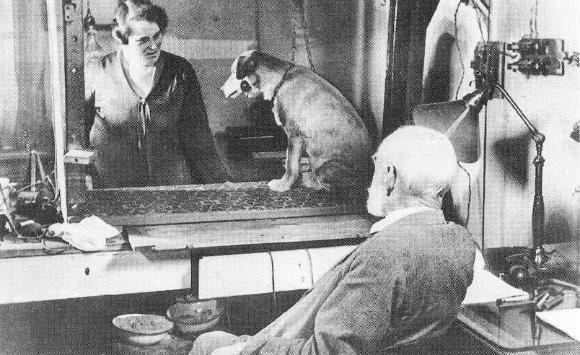 pavlov-perro